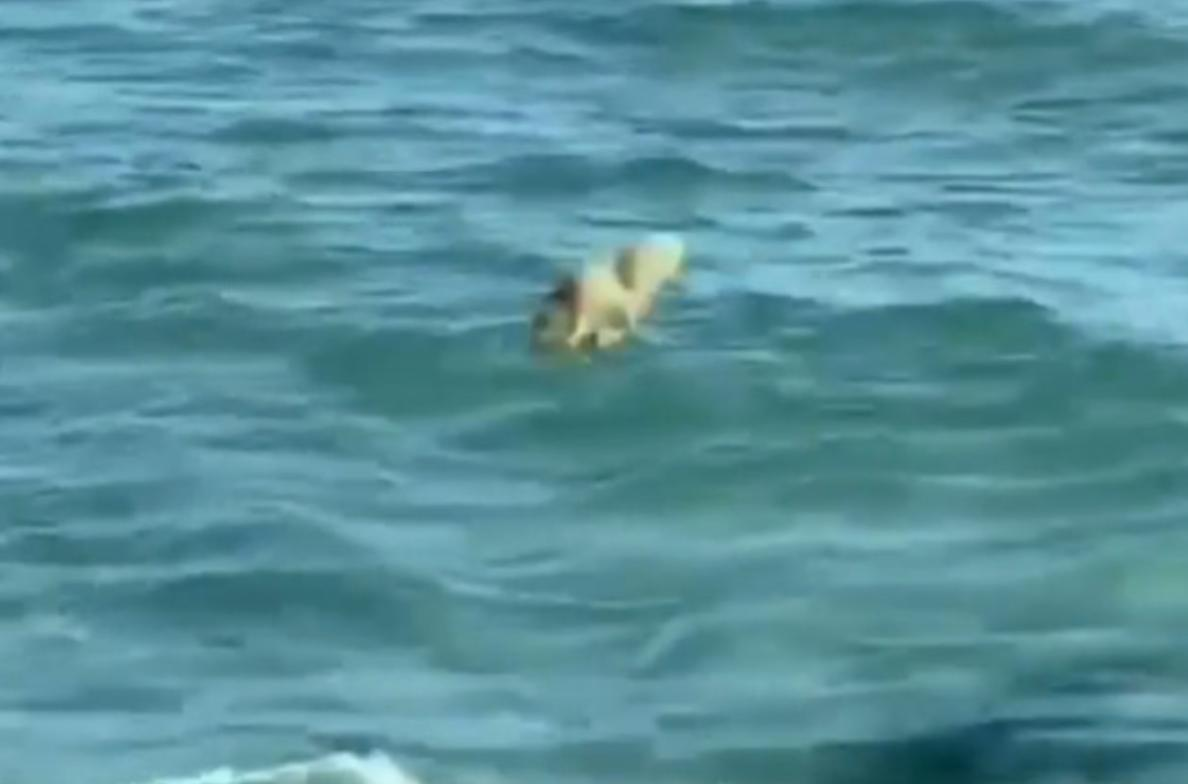 Живодеры в Актау забивают тюленей: шокирующее видео