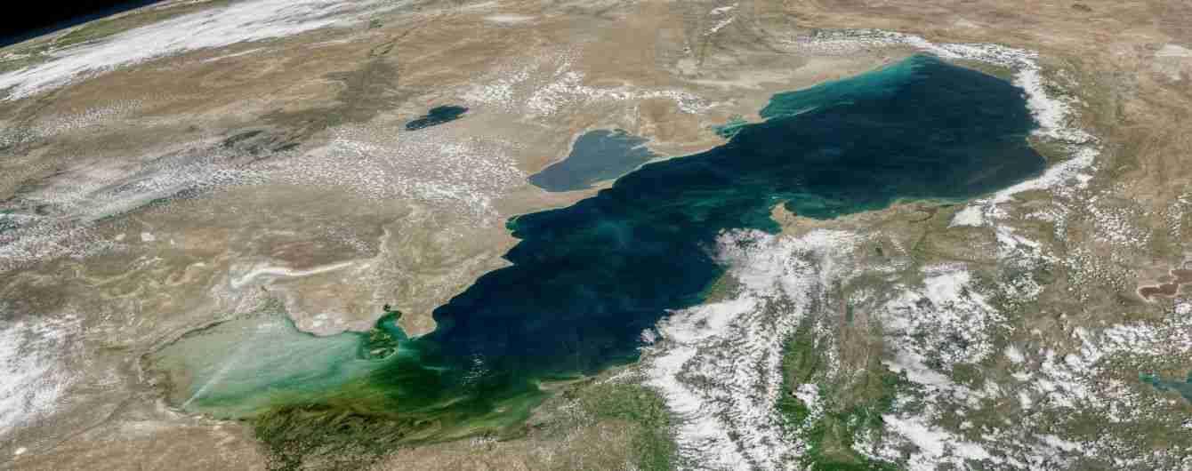 Самые интересные обитатели Каспийского моря: от султанок до морских тараканов