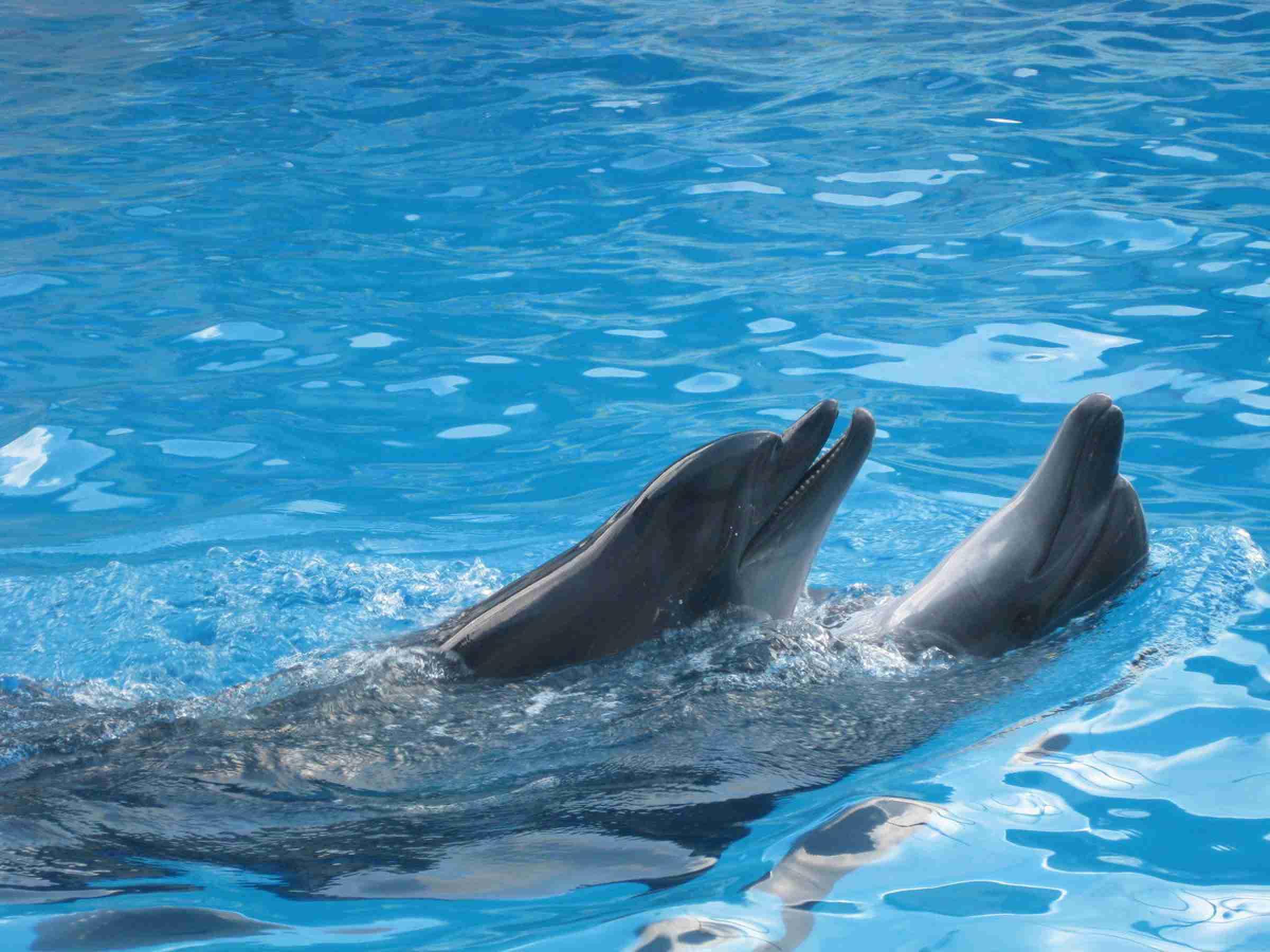 Казахстанцы призвали спасти дельфинов