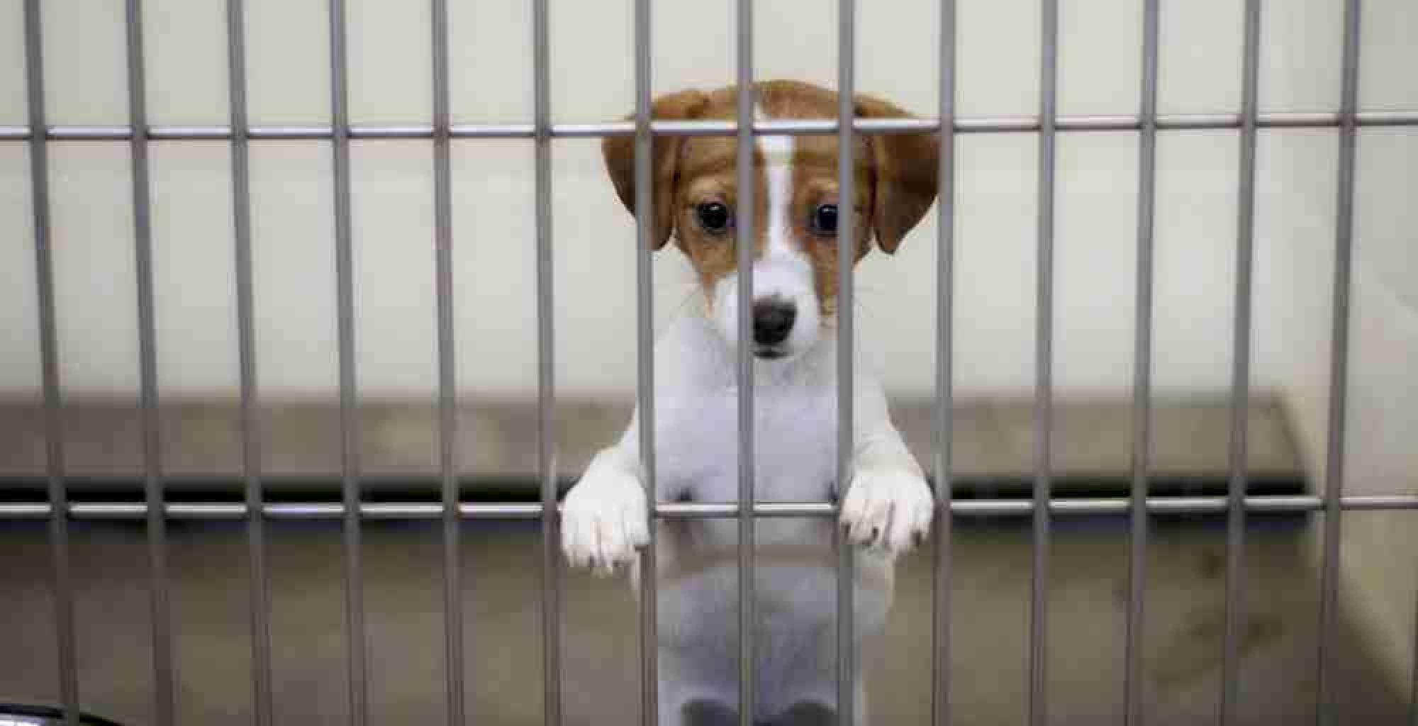 В деле об издевательствах над собаками в Нур-Султане нашли виновного: подробности